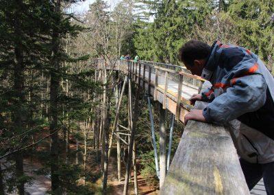Ausblicke Bayrischer Wald 2