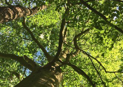 Baum10